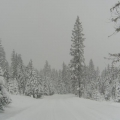 gallery-snowy-road-2